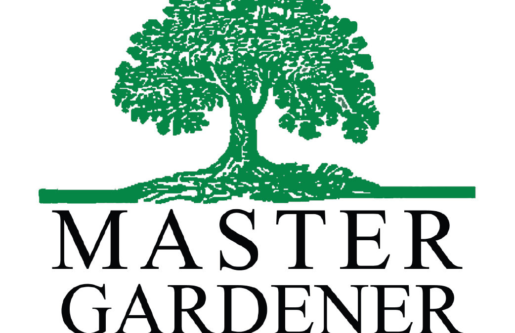 In the Garden with Master Gardener Marilyn Love