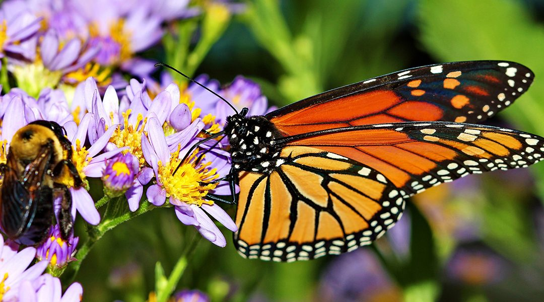 Importance of Pollinators